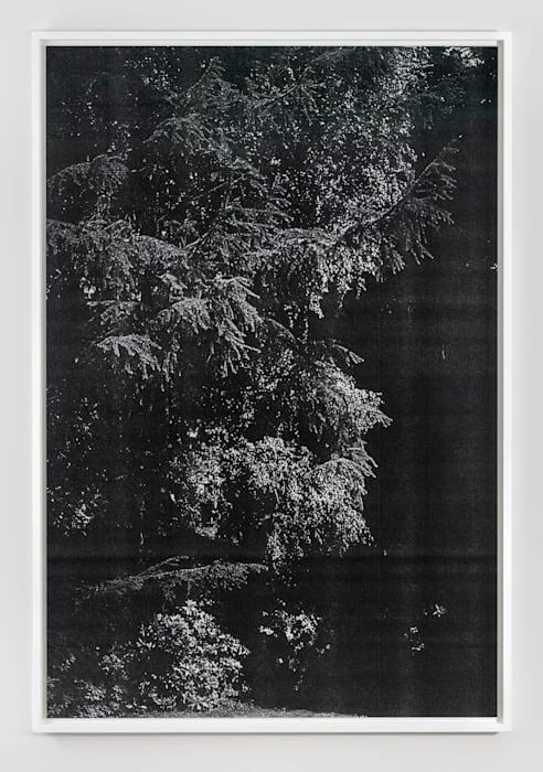 Wald (Reinshagen) II by Wolfgang Tillmans