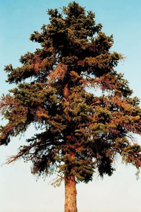 Tree by Tobias Zielony
