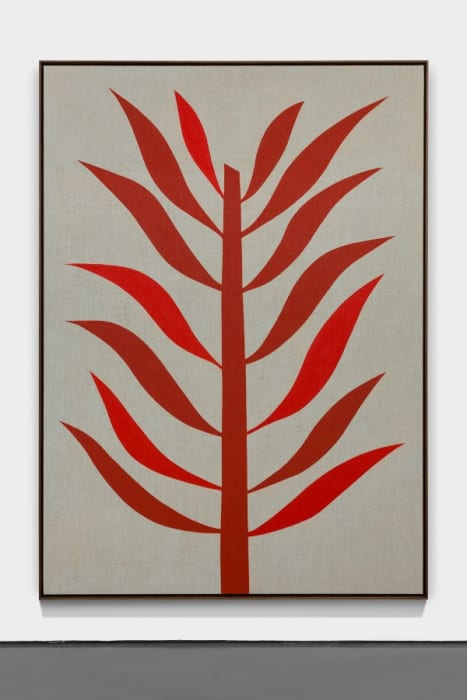 Planta roja by Antonio Ballester Moreno