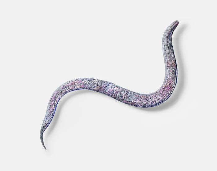 Approximation (C. Elegans, long tail) by Katja Novitskova