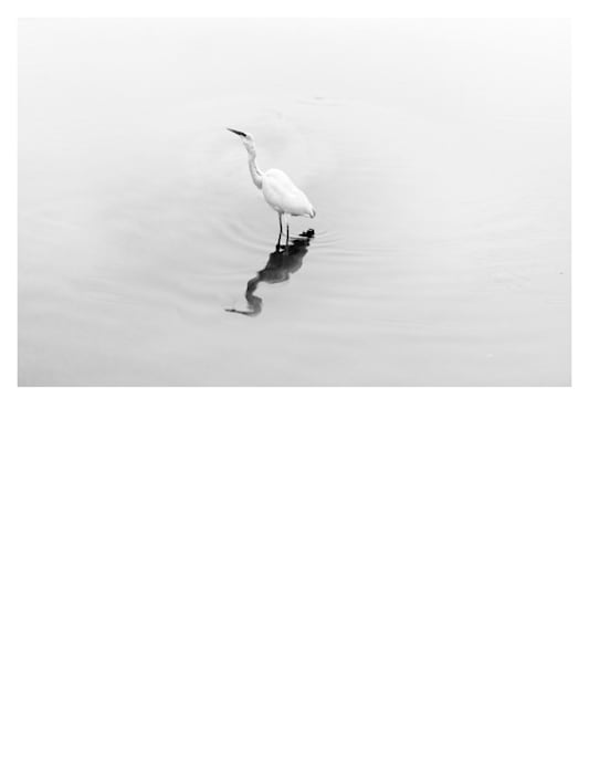 Natural History (Egret) by Robert Zhao Renhui