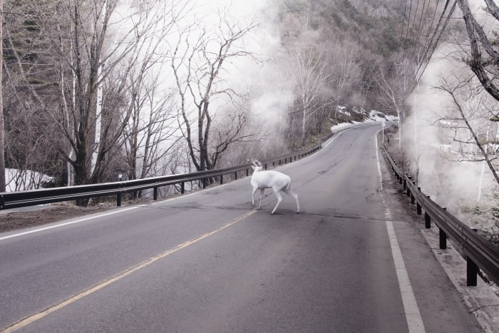 Deer Park, Japan by Robert Zhao Renhui