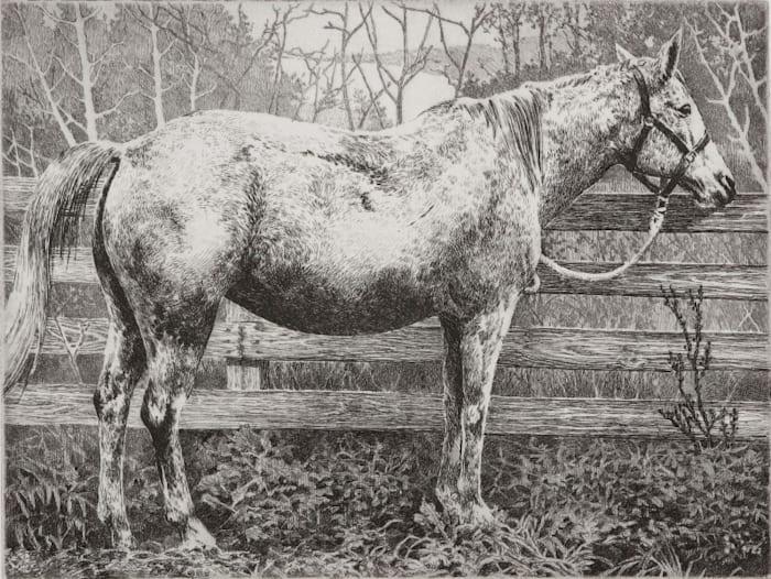 White Horse by Manabu Ikeda