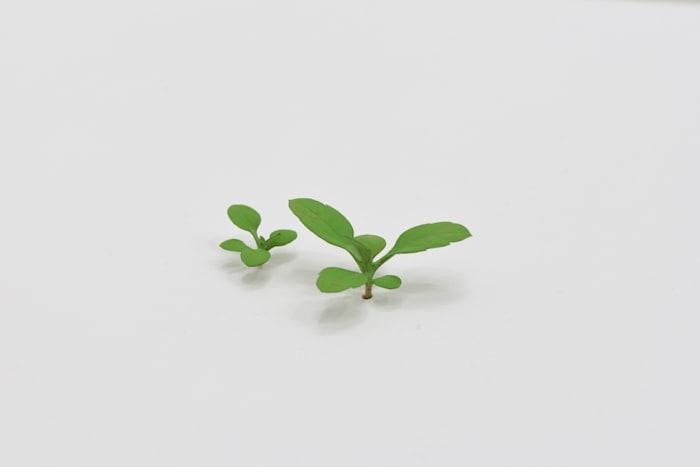 Weeds by Yoshihiro Suda