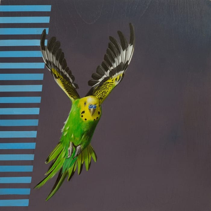 Visual Navigation in Budgerigar Flight by Sam Leach