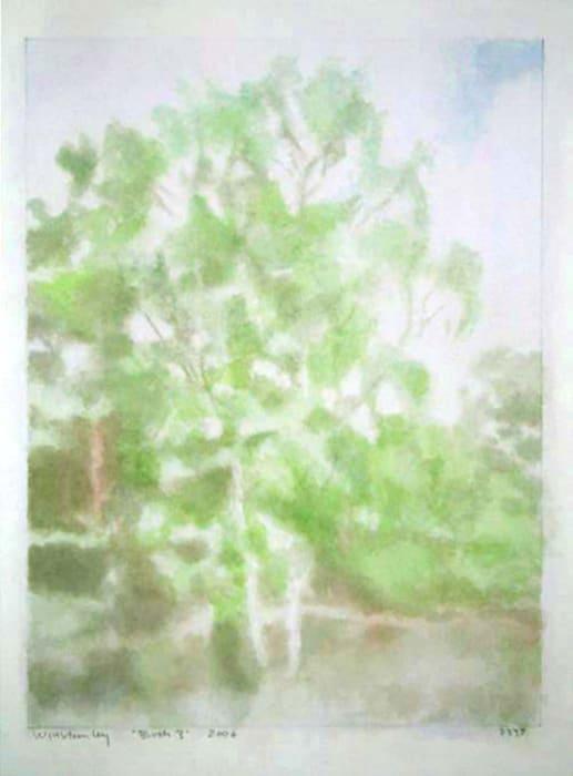 Birch 3 by Paul Winstanley