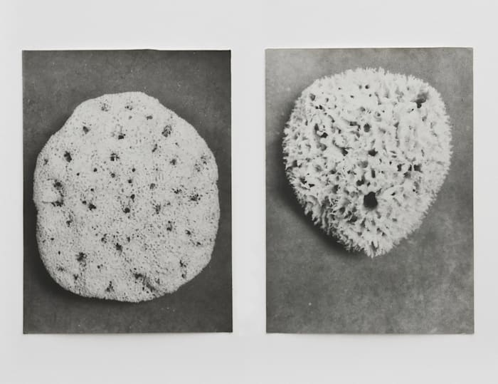 Untitled (Sponge I) and Untitled (Sponge II) by Jochen Lempert