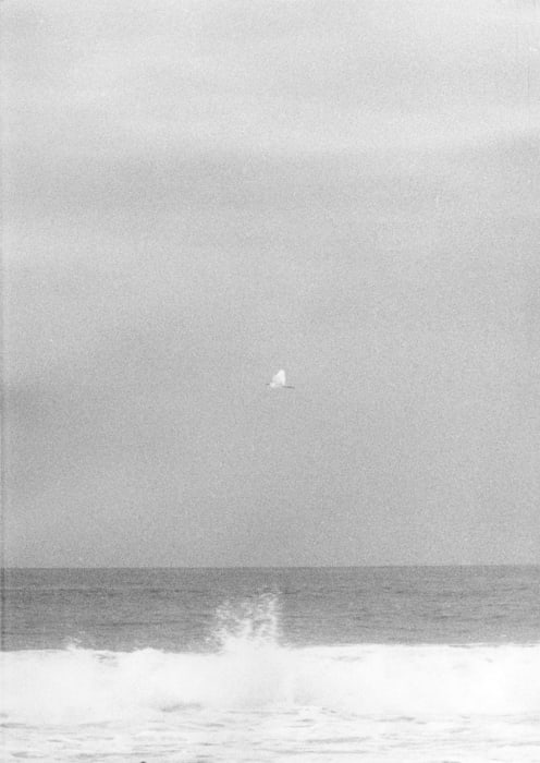 Untitled (Egretta) by Jochen Lempert