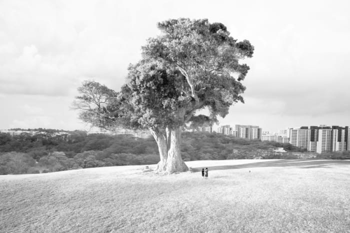 Singapore Tree by Robert Zhao Renhui