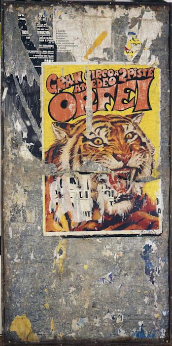 La tigre ci guarda by Mimmo Rotella