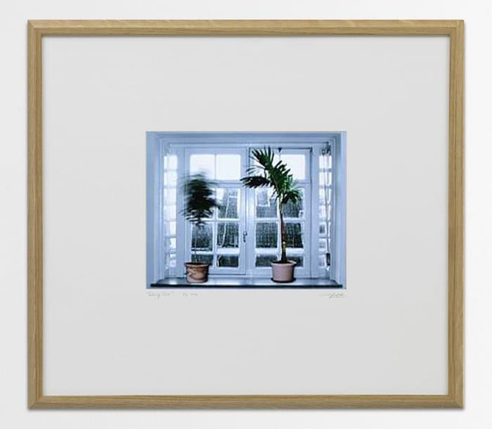 Talking Trees - Window by Ger van Elk