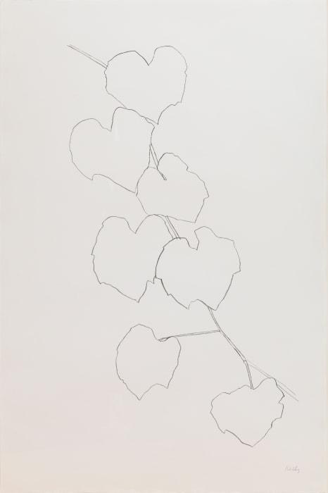 Grape Leaves II by Ellsworth Kelly