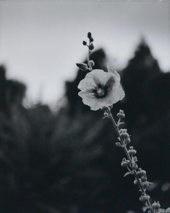 Kyoto 5 by Huang Rui