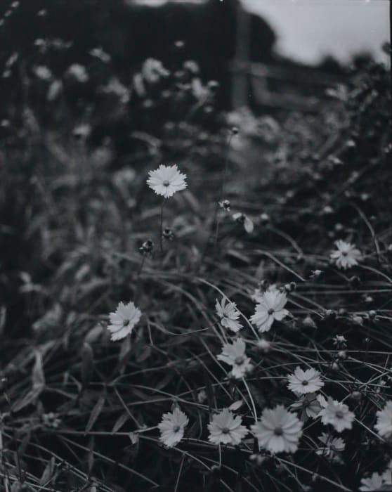 Kyoto 8 by Huang Rui