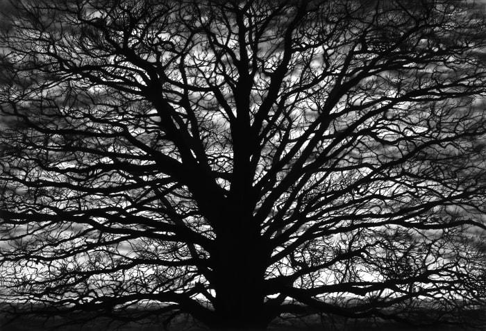 Untitled (Gothic Tree) by Robert Longo