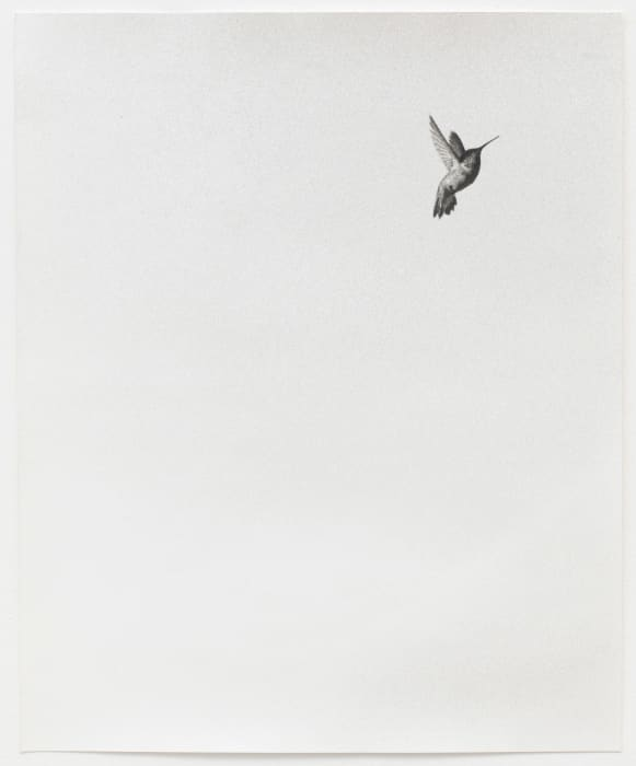 Untitled (Colibri II) by Jochen Lempert