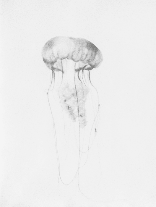(34) Untitled (Jellyfish) by Jochen Lempert