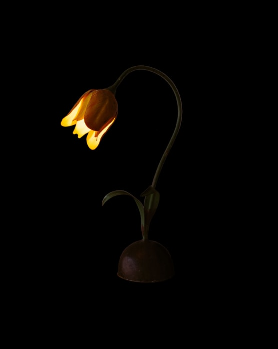 Flower Lamp by Sarah Charlesworth