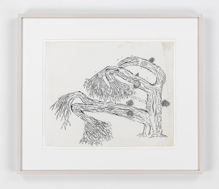 Cactus by Gordon Matta-Clark