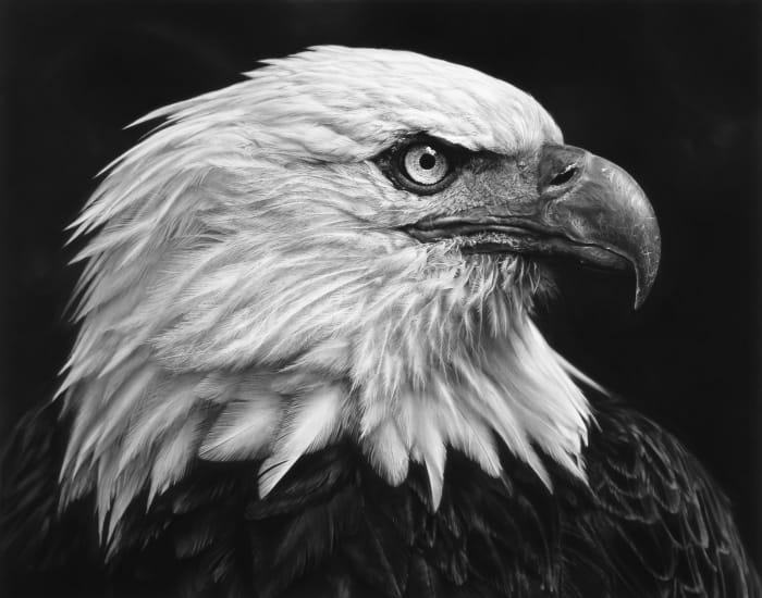 Untitled (Eagle) by Robert Longo