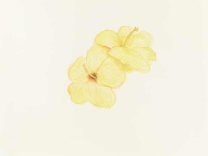 Two Hibiscuses by Mayo Thompson