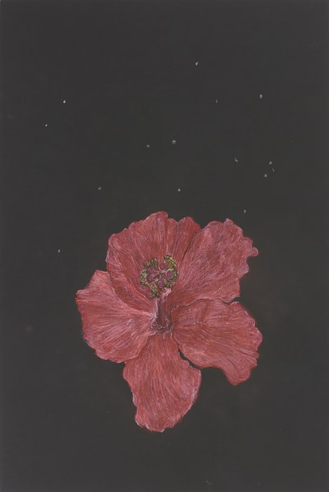Hibiscus by Mayo Thompson