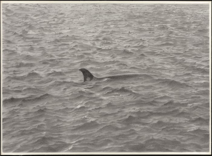 Sea Drawing with Whale by Vija Celmins