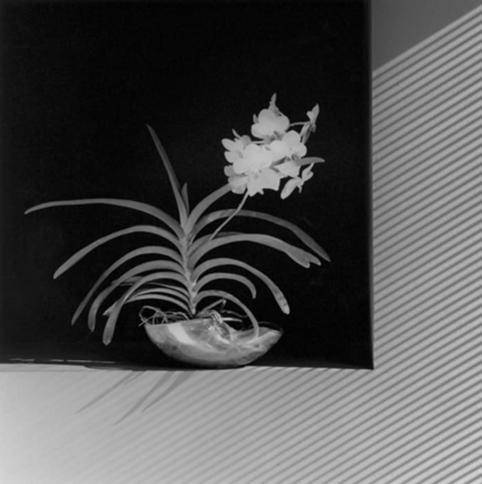 Flower (edition of 10 + 2 AP; this is 10/10) by Robert Mapplethorpe