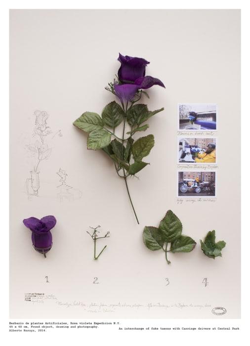 Rosa Violeta (Expedición N.Y.) - Herbario de Plantas Artificiales by Alberto Baraya