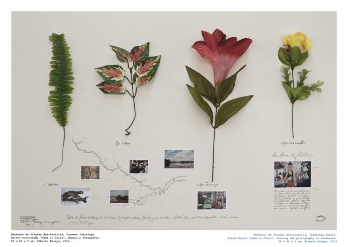 Taxones Tabatinga - Herbario de Plantas Artificiales by Alberto Baraya