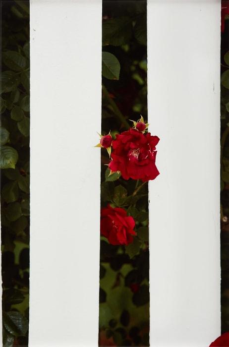 Picket Fence II by Roe Ethridge