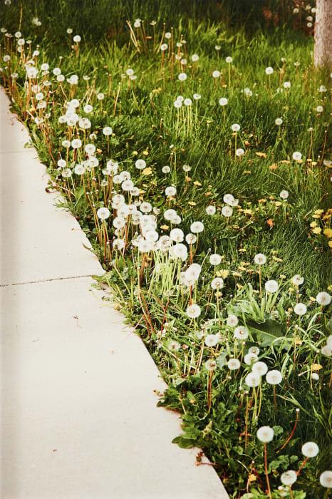Sidewalk and Dandelions by Roe Ethridge