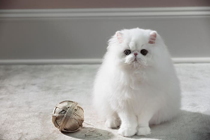 Cat with Yarn Ball by Roe Ethridge