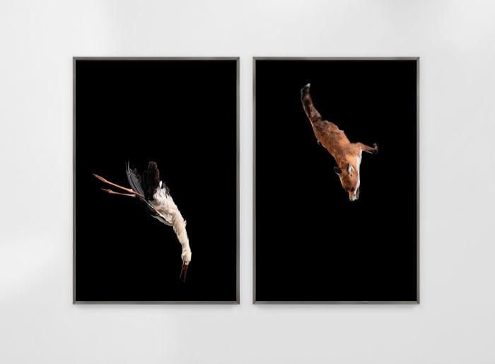 Tiere sind Engel mit Fell Delta by Julius von Bismarck