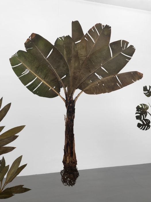 I like the flowers (Musaceae) by Julius von Bismarck
