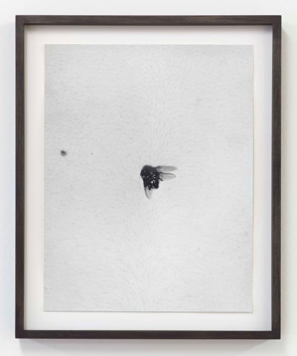 Fly on Body by Talia Chetrit