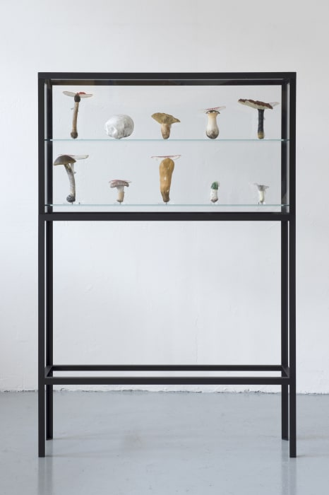 Double Mushroom Vitrine by Carsten Höller