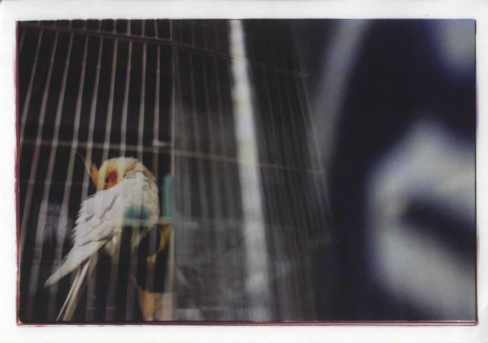 noir by Mika Ninagawa