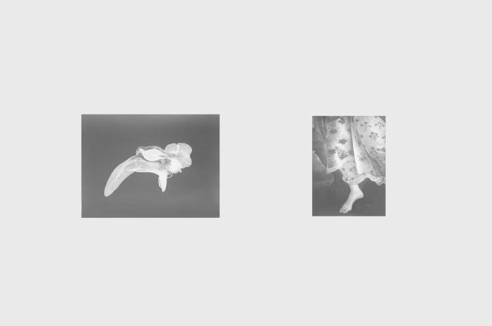 Untitled (Corydalis + Botticelli VI) by Jochen Lempert
