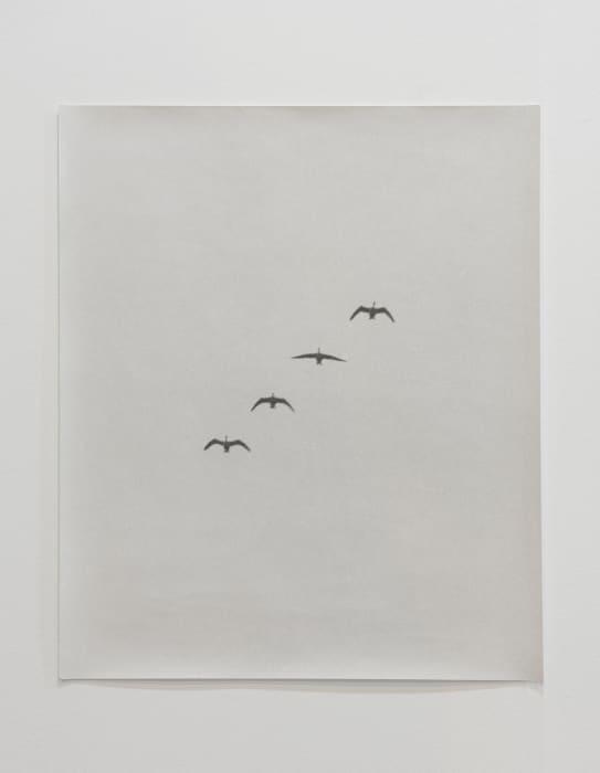 Gänse (Transhimalaya Migration) by Jochen Lempert