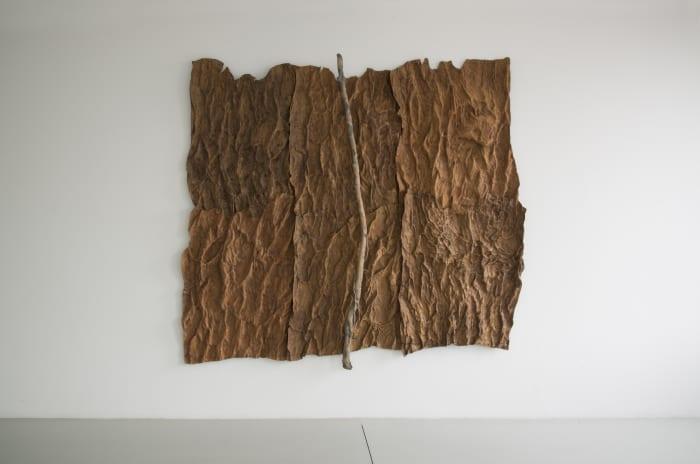 Pelle di cedro. Edera by Giuseppe Penone