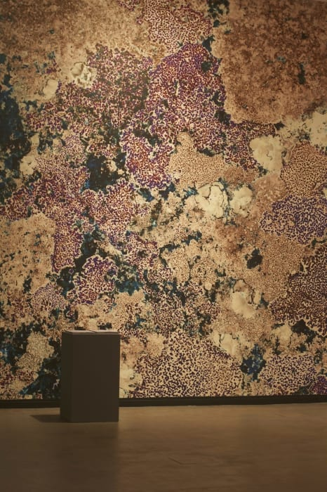 The Proposal of a Surface (Lichen Wall) by Zin Taylor