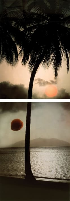 Rising Sun, Falling Coconut by Bill Beckley