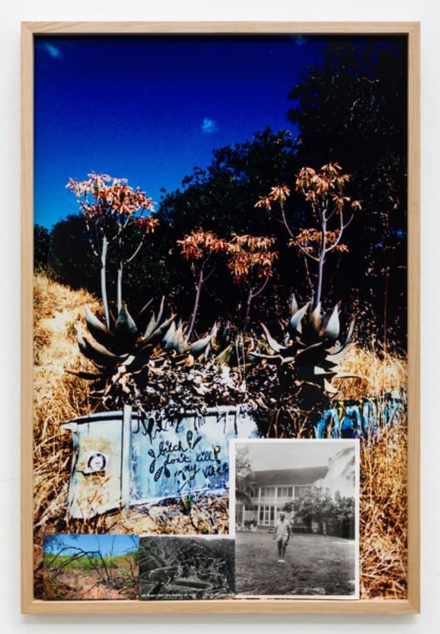 Aloe Succotrina by Marius Engh