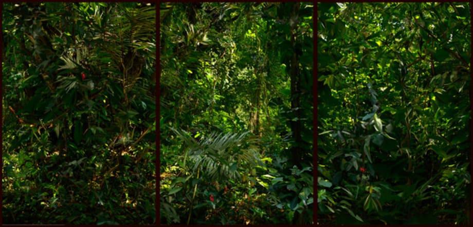 September 2012, Botanic Garden, Rio de Janeiro (from the series Landscape Crystallisation) by Albano Afonso
