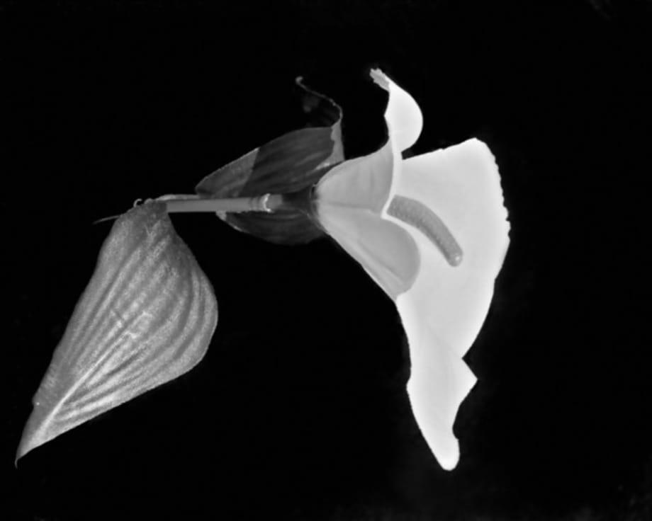 Untitled (Flower) by Scott Benzel