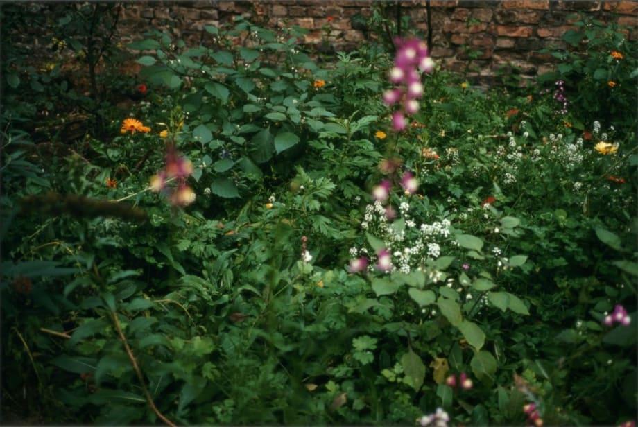 """""""Garten"""" by Wolfgang Tillmans"""