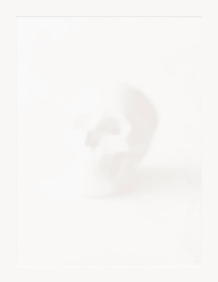 Skull by Sarah Charlesworth