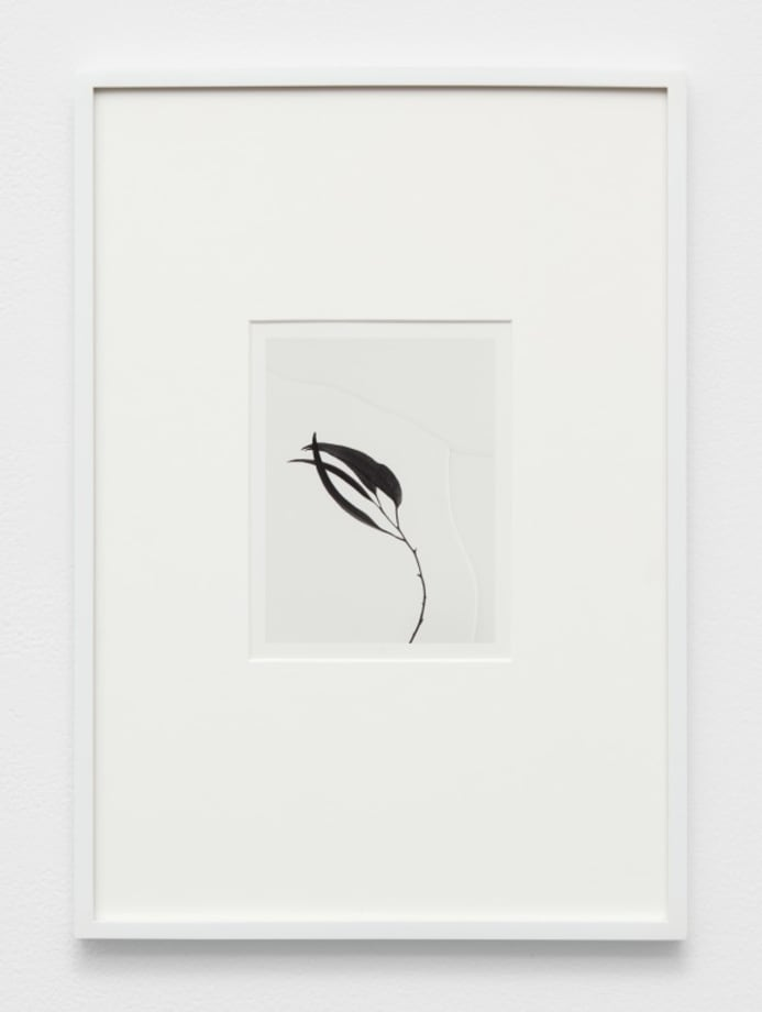 Untitled (Flora) by Anthony Pearson