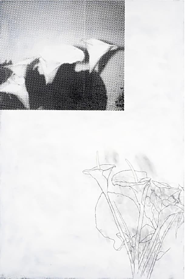 Plant, Plant, Black, White by Julião Sarmento